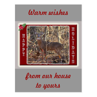 Whitetail Deer Happy Holidays Items Postcard