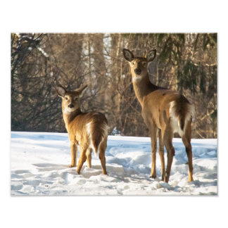 Whitetail Deer in Snow Art Photo