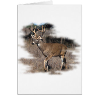 Whitetail deer in the field card