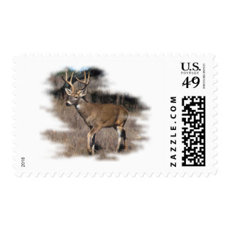 Whitetail deer in the field stamp