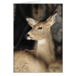 Whitetail Deer Notecard - Blank Inside