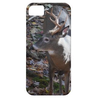Whitetail Deer Phone Case