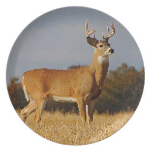 Whitetail Deer Plates | Zazzle