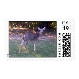 Whitetail deer postage