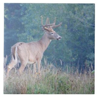 Whitetail Deer (Profile) Decorative Tile