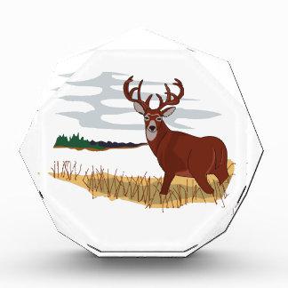 Whitetail Deer Scene Award
