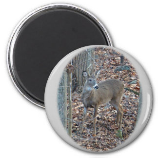 Whitetail Deer Spike Buck Series 2 Inch Round Magnet