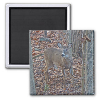 Whitetail Deer Spike Buck Series 2 Inch Square Magnet
