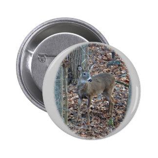 Whitetail Deer Spike Buck Series Pinback Button