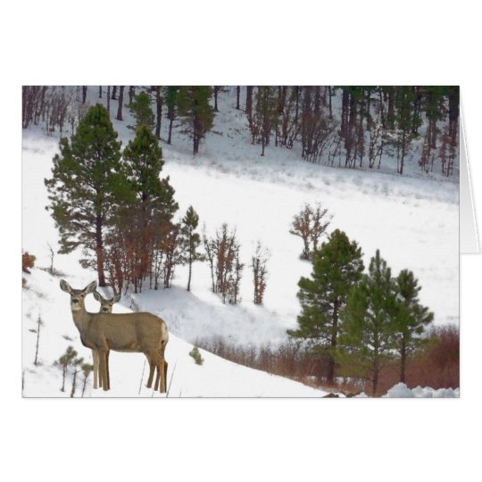 Whitetail Deer Wildlife Animals Fawns Card