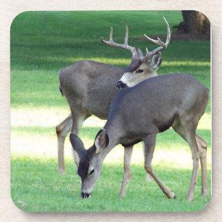 Whitetail Deer Wildlife Animals Fawns Coaster