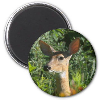 Whitetail Doe Standing Guard 2 Inch Round Magnet