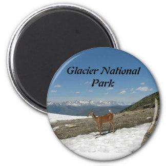 Whitetail en el Parque Nacional Glacier de la mota Imán Redondo 5 Cm