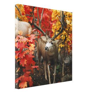 Whitetail en otoño impresion en lona