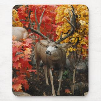 Whitetail en otoño tapete de ratón