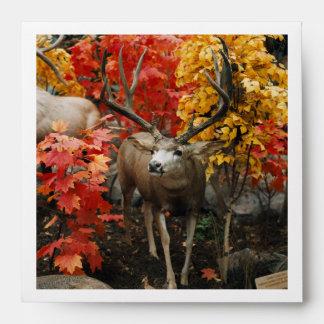 Whitetail In Autumn Envelope