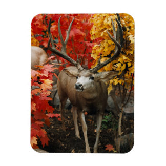 Whitetail In Autumn Magnet