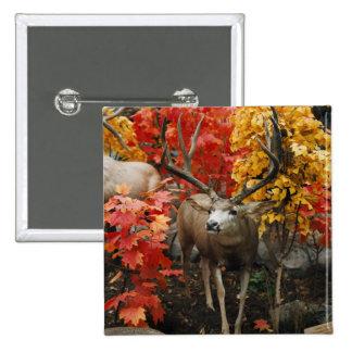 Whitetail In Autumn Pinback Button