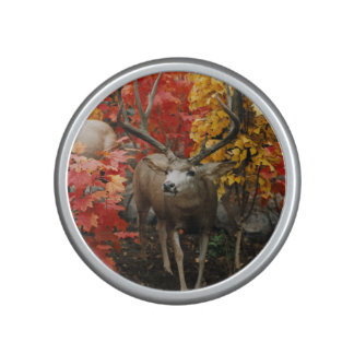Whitetail In Autumn Speaker