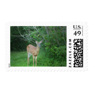 Whitetail Stamps