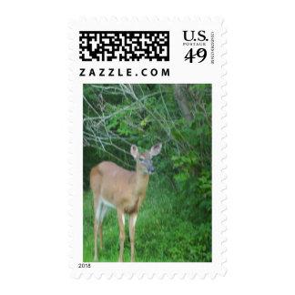 Whitetail Postage Stamp