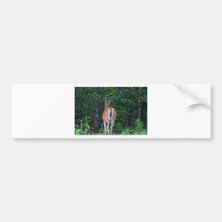 Whitetail Retreat Bumper Sticker