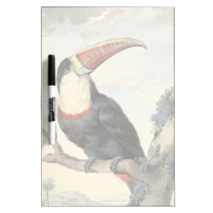 Whitethroated American Toucan Vintage Watercolor Dry-Erase Board at Zazzle