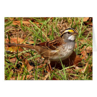 Whitethroated Sparrow Stationery Note Card