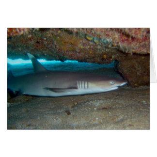 Whitetip Reef Shark 2 Card