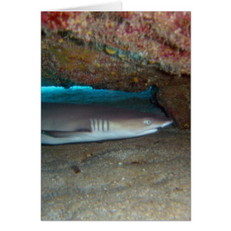 Whitetip Reef Shark 2 Greeting Cards
