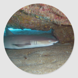 Whitetip Reef Shark 2 Classic Round Sticker