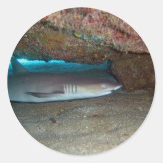 Whitetip Reef Shark 2 Classic Round Sticker