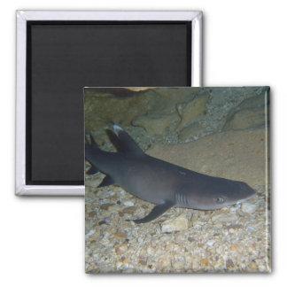 Whitetip Reef Shark 2 Inch Square Magnet