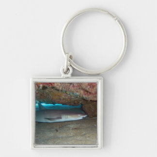 Whitetip Reef Shark 2 Keychain