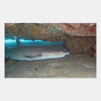 Whitetip Reef Shark 2 Rectangle Sticker