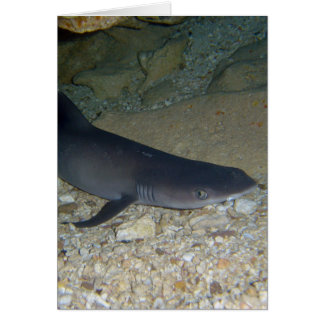 Whitetip Reef Shark Card