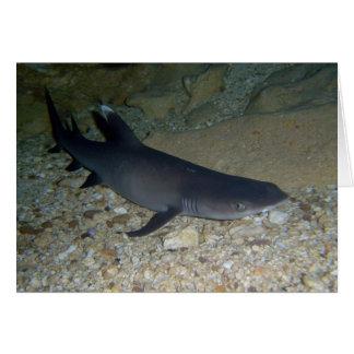 Whitetip Reef Shark Card