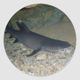 Whitetip Reef Shark Classic Round Sticker