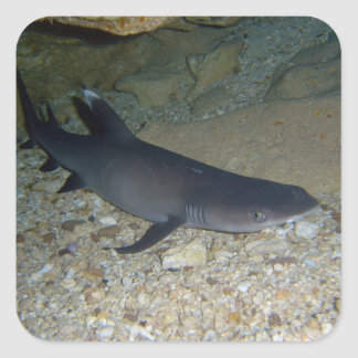 Whitetip Reef Shark Square Sticker