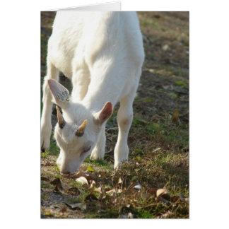 Whitey The Saanen Goat Greeting Card