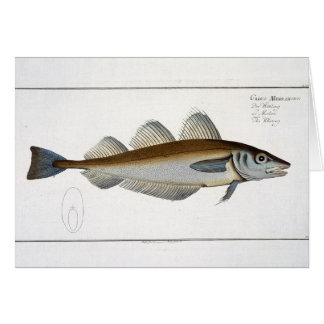 Whiting (Gadus Merlangus) plate LXV from 'Ichthyol Card