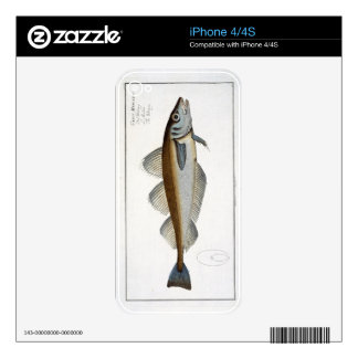 Whiting (Gadus Merlangus) plate LXV from 'Ichthyol Decal For The iPhone 4S