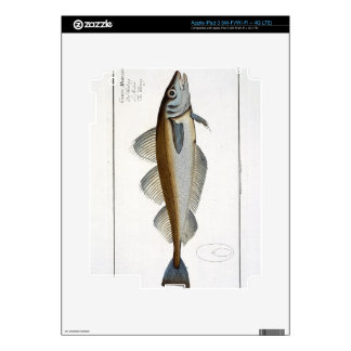 Whiting (Gadus Merlangus) plate LXV from 'Ichthyol Decals For iPad 3