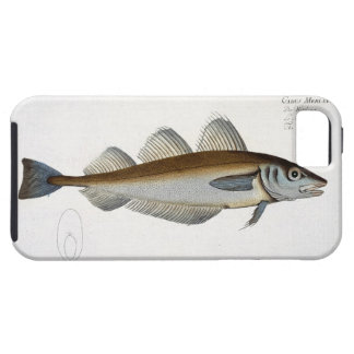 Whiting (Gadus Merlangus) plate LXV from 'Ichthyol iPhone SE/5/5s Case