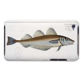 Whiting (Gadus Merlangus) plate LXV from 'Ichthyol iPod Touch Case