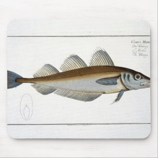 Whiting (Gadus Merlangus) plate LXV from 'Ichthyol Mouse Pad