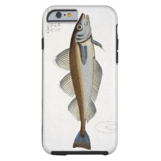 Whiting (Gadus Merlangus) plate LXV from 'Ichthyol Tough iPhone 6 Case
