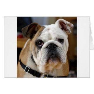 Whitish brown colored English Bull dog Posing Card