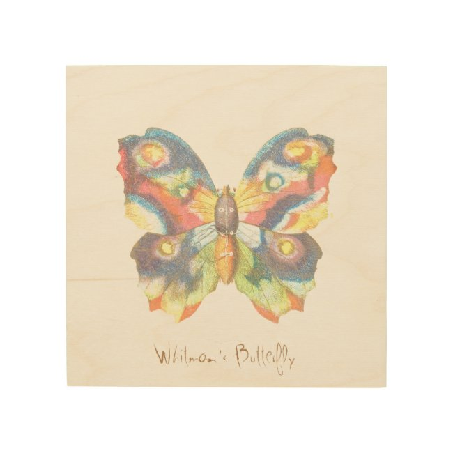 Whitman's Butterfly