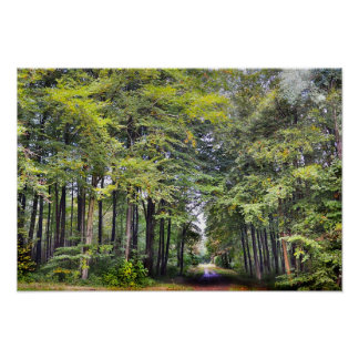 Whitwell Wood Poster